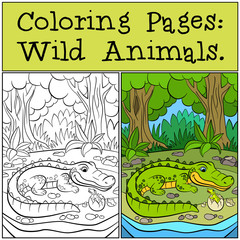 Coloring Pages: Wild Animals. Mother alligator looks at her little cute baby alligator in the egg.