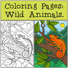 Coloring Pages: Wild Animals. Little cute orange chameleon sits on the tree branch.