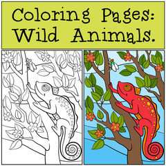 Coloring Pages: Wild Animals. Little cute red chameleon sits on the tree branch.