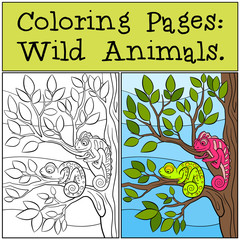 Coloring Pages: Wild Animals. Two little cute chameleons.
