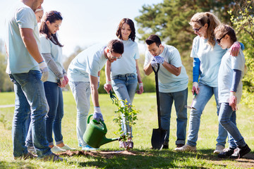group of volunteers planting and watering tree