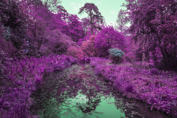 Fotobehang Aubergine Stunning infrared alternative color landscape image of trees ove