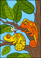Cartoon animals for kids. Little cute orange chameleon gives flower to the yellow chameleon.