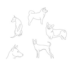 Dog graphic