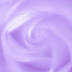 Rose soft purple blur background