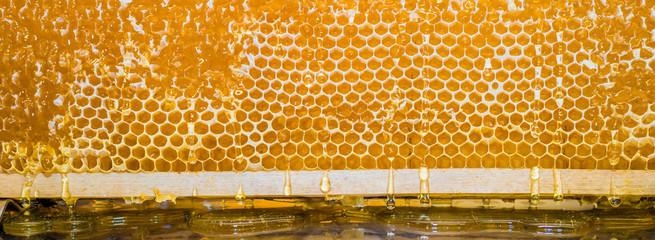 Tropfend und zäh fließend läuft der frische Honig aus der Wabe