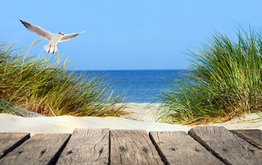 Fotorollo Nordsee Ostseestrand mit Holzsteg, Dünen und Möwe