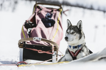 Dog lying on snow