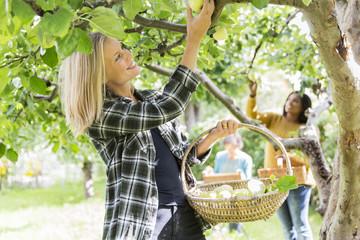 Women picking apples