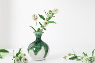 white clover in vase