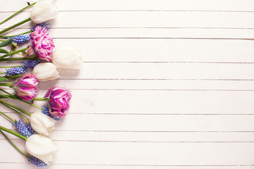 Bright  violet and white tulips flowers on  wooden background.