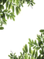 green leaf frame on white background isolate