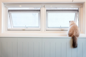 A White Furry Cat Sitting on the Window Sill Looking out through the Window
