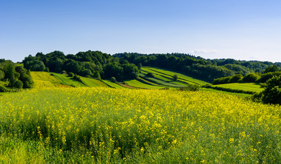 Photo sur cadre textile Colline Beauty green hills in Poland