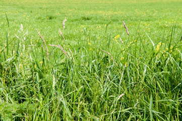 Long grass in a field with sunlight
