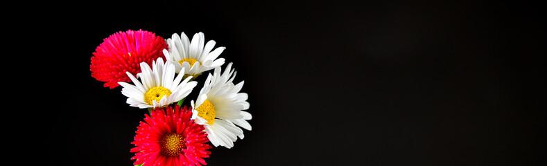 Blume schwarzer Hintergrund