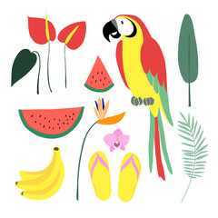 Summer tropical graphic elements. Parrot bird. Jungle floral illustrations, palm leaves, orchid, flower, watermelon,banana fruit