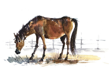 foal, horse, watercolor, illustration