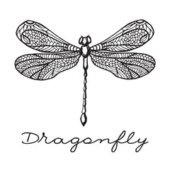 Hand drawn dragonfly with doodle drawn wings