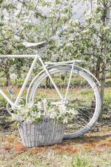 beautiful white bike is in the apple lush garden with a basket of flowers