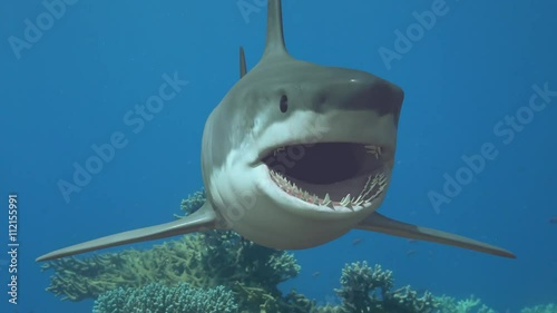 the shark comes up and springs forward at camera underwater in the sea 3D render
