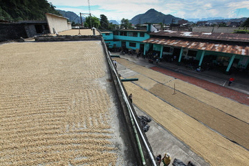 TINGO MARIA, PERU - JUNE 22: The drying of coffee beans in courtyard of Naranjillo cooperative in...