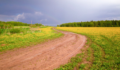 The field with yellow dandelions and a dirt road after a shtorm