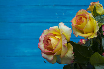 Three roses on a wooden blue background