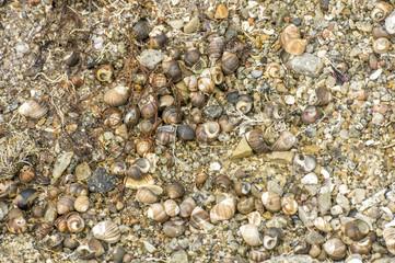 tide is out nova scotia
