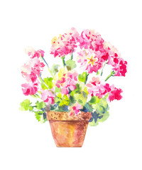 Geranium watercolor, vector illustration, isolated on white