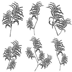 Silhouettes of leaves, botanical illustration isolated on white background, .Monochrome floral drawing. Hand drawn vector sketch for cosmetic, medicine, package design, cards, banner, patterns