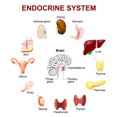 Endocrine system. Set icons