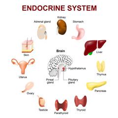 Endocrine system. Set icons