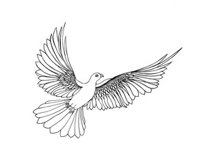 Dove in free flight. Isolated on white background. Drawn by hand