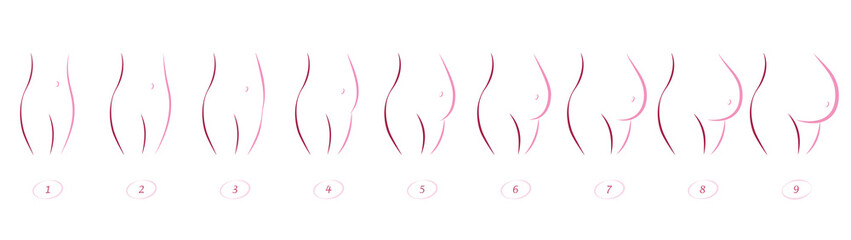 Pregnancy stages - sequence of belly growth in nine months - outline icon illustration on white background.