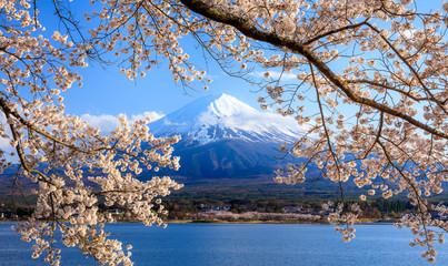 Wall Mural - Mt. Fuji and Cherry Blossom at lake Kawaguchiko, Japan