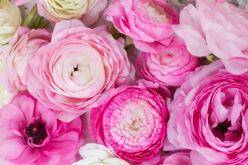 Pink and white ranunculus flowers