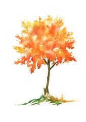 Осеннее дерево акварелью на изолированном белом фоне