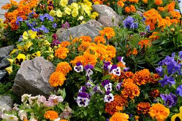 Wall Murals Pansies Decorative flower bed with stones. Landscaping