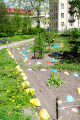 The yard in Saint-Petersburg with a beautiful lawn in the spring