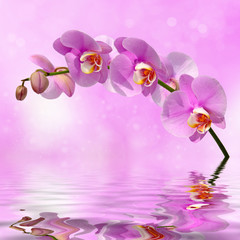 Orchid flowers over water abstract background