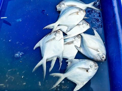 Raw fresh fish in market, seafood