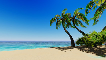 Tropical blue sea palms