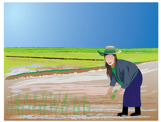 agriculture transplant rice seedlings vector design