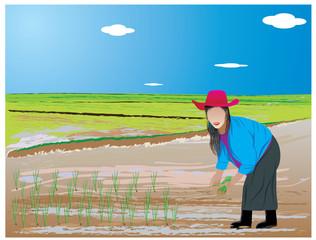 agriculture transplant rice seedlings vector design