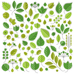 Spring tree leaves, botany and eco flat images. Vector illustrat