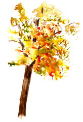 Autumn tree on white, watercolor hand painted