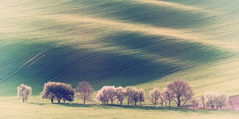 Vintage Agricultural Landscape