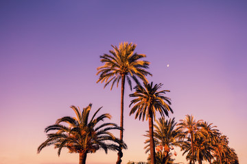Palm trees against pink sunset sky