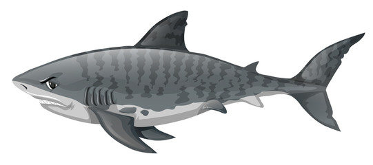 Gray shark looking angry